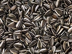 sunflower seeds storage